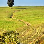 The tree and the furrows by Silvia Ganora