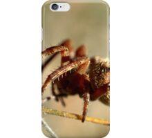 Arachnid iPhone Case/Skin