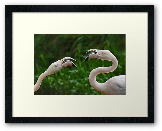 Flamingo by Janine  Hewlett