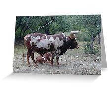 Longhorns Greeting Card