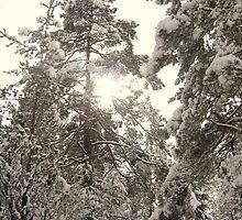 Mid Winter by HELUA