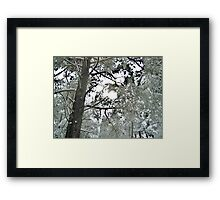 Beautiful Giants Framed Print