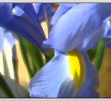 Watercolor Iris by Lorale