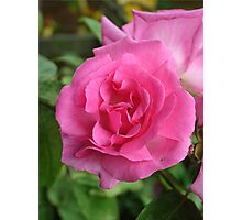 The rose Photographic Print