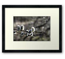 Spring Willow Framed Print