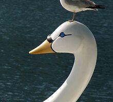 Bird On Bird by Rebecca Cruz