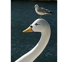Bird On Bird Photographic Print