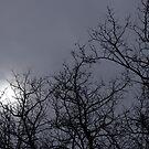 moon by reflexio