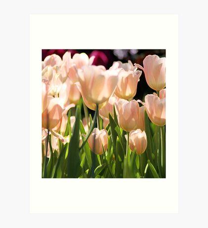 Peach Tulips Art Print