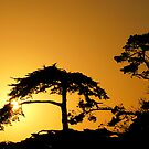 #260      Sunset From Pebble Beach by MyInnereyeMike