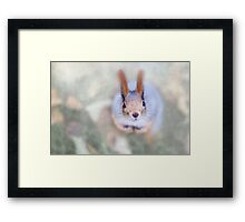 Squirrel looks at you from the bottom up Framed Print