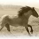 Run Wild by Gene Praag