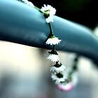 Daisy Chain by annnna