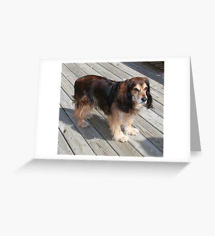 The Stray ! Greeting Card