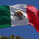 Viva Mexico by Jena Ferguson