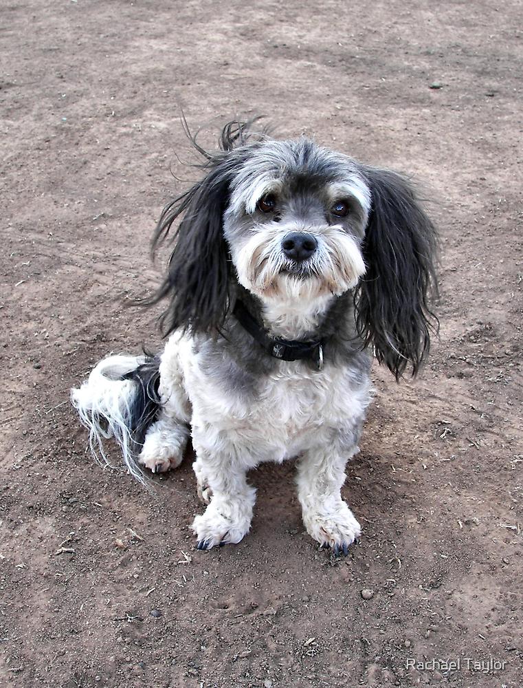 Max the Wonderdog! by Rachael Taylor