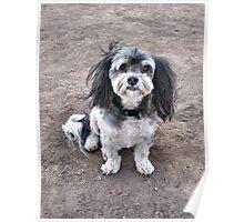 Max the Wonderdog! Poster