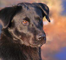 Portrait of Gus by Danielle Davenport