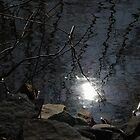 Evening Reflected by Anna Williams