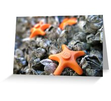 Seastars Greeting Card