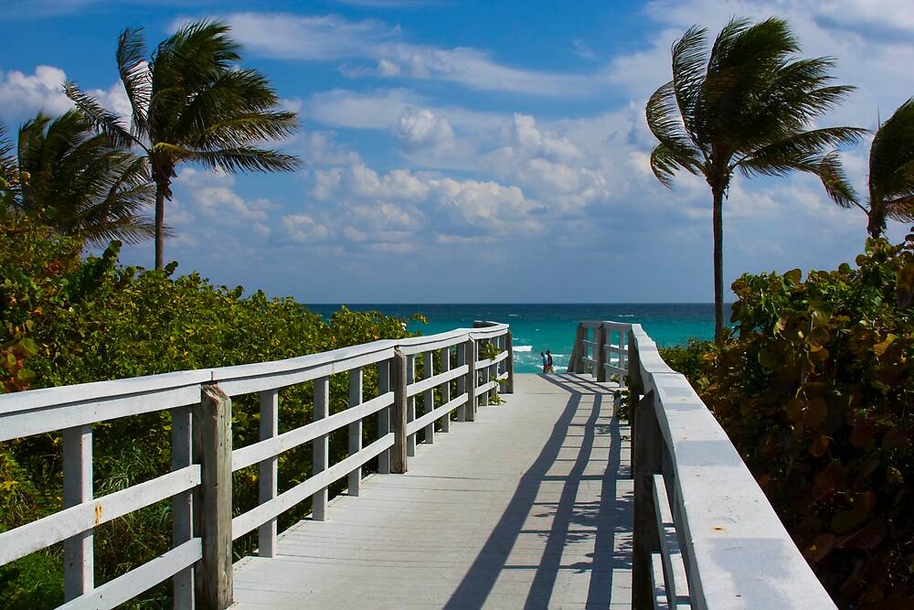 Boardwalk, Sunshine and Palm Trees by photogurl