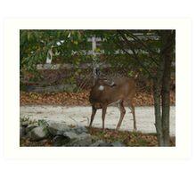 Whitetail Deer kingdom1 Art Print