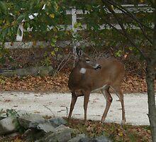 Whitetail Deer kingdom1 by Jack McCabe