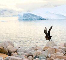 Flight by Violetmoonwater