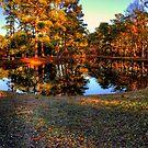 Lake at Brookgreen Gardens by imagetj