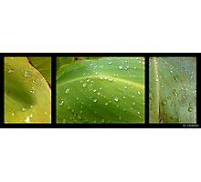 Freshly fallen rain droplets on leaves.... Photographic Print
