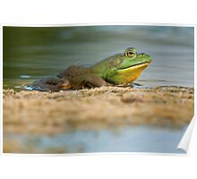 Pig Frog Relaxing Poster