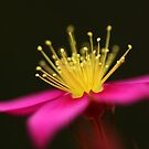 Wildflower by Annette Blattman