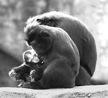 Mother's Embrace by Lisa G. Putman