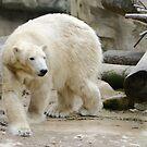 Polar Bear by Lisa G. Putman