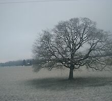 Snow covered tree by Corina
