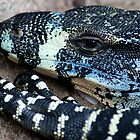 Lace Monitor by Mette  Spange