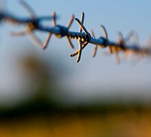 Barbed wire by rowie51