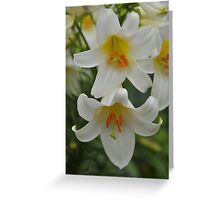 """Trumpet Lily """"Regale Alba"""" Greeting Card"""