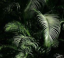 winter light on the jungle - luz del invierno en la selva by Bernhard Matejka