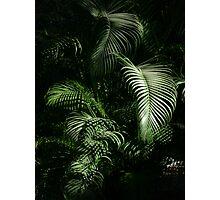 winter light on the jungle - luz del invierno en la selva Photographic Print