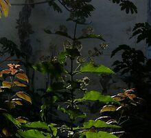 light and shade - luz y sombra by Bernhard Matejka