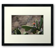 Blooming cactus in nature Framed Print