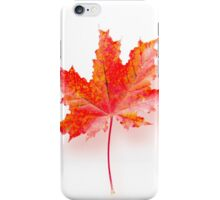 Maple leaf iPhone Case/Skin