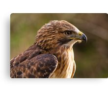 Red Tailed Buzzard Canvas Print