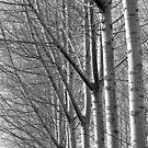 Boursault Birches by Victor Pugatschew