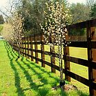 Sun Shining Along Fence by Kristie King