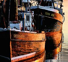 Morning Glory Boats by Philip James Filia