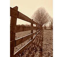 Fence & Tree Photographic Print