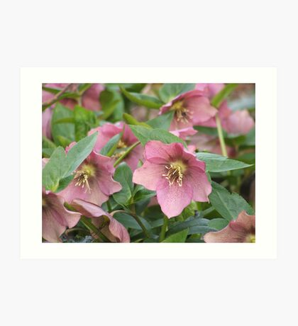 Evergreen Arboretum Pink Beauties Art Print