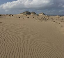 Guadalupe Dunes by Cathy L. Gregg